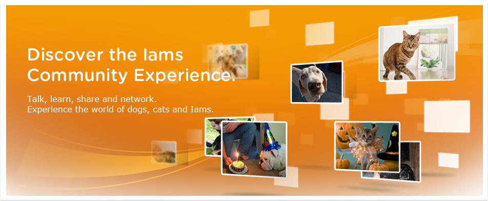 Discover the Iams Community Experience.