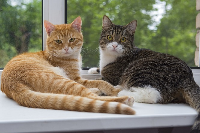 two cats on window sill