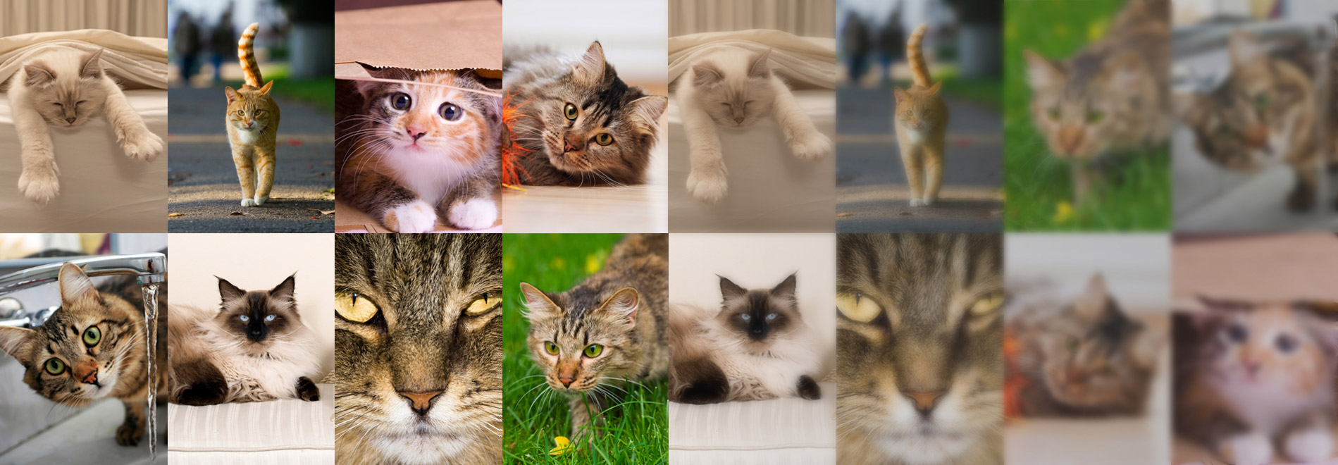 What is your cat personality?