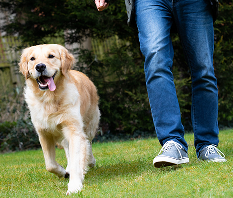 <p>15 ways to make</p> <p>your dog <em>happy</em></p>